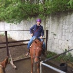 Daniel horse